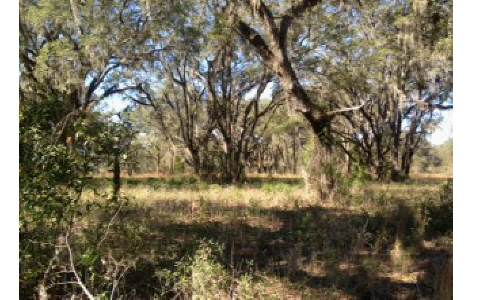 TBD 145TH ROAD, Live Oak, FL 32060