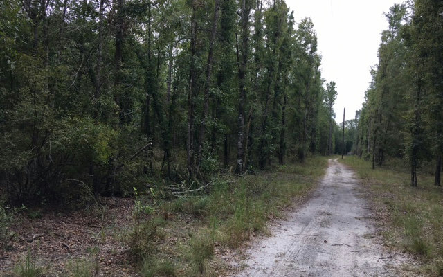 SW SPRUCE ROAD, Fort White, FL 32038