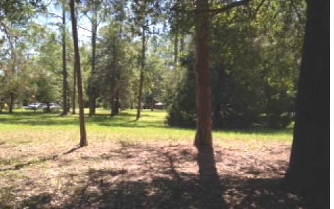 CR136, Dowling Park, FL 32060