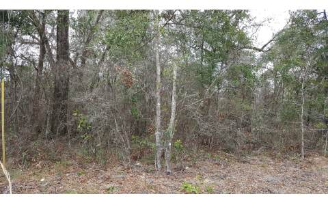 TBD TRENTON TERRACE, Fort White, FL 32038
