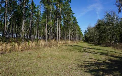 CR 252, Live Oak, FL 32060