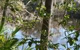 17950 RUNNING SPRINGS DRIV, Live Oak, FL 32060